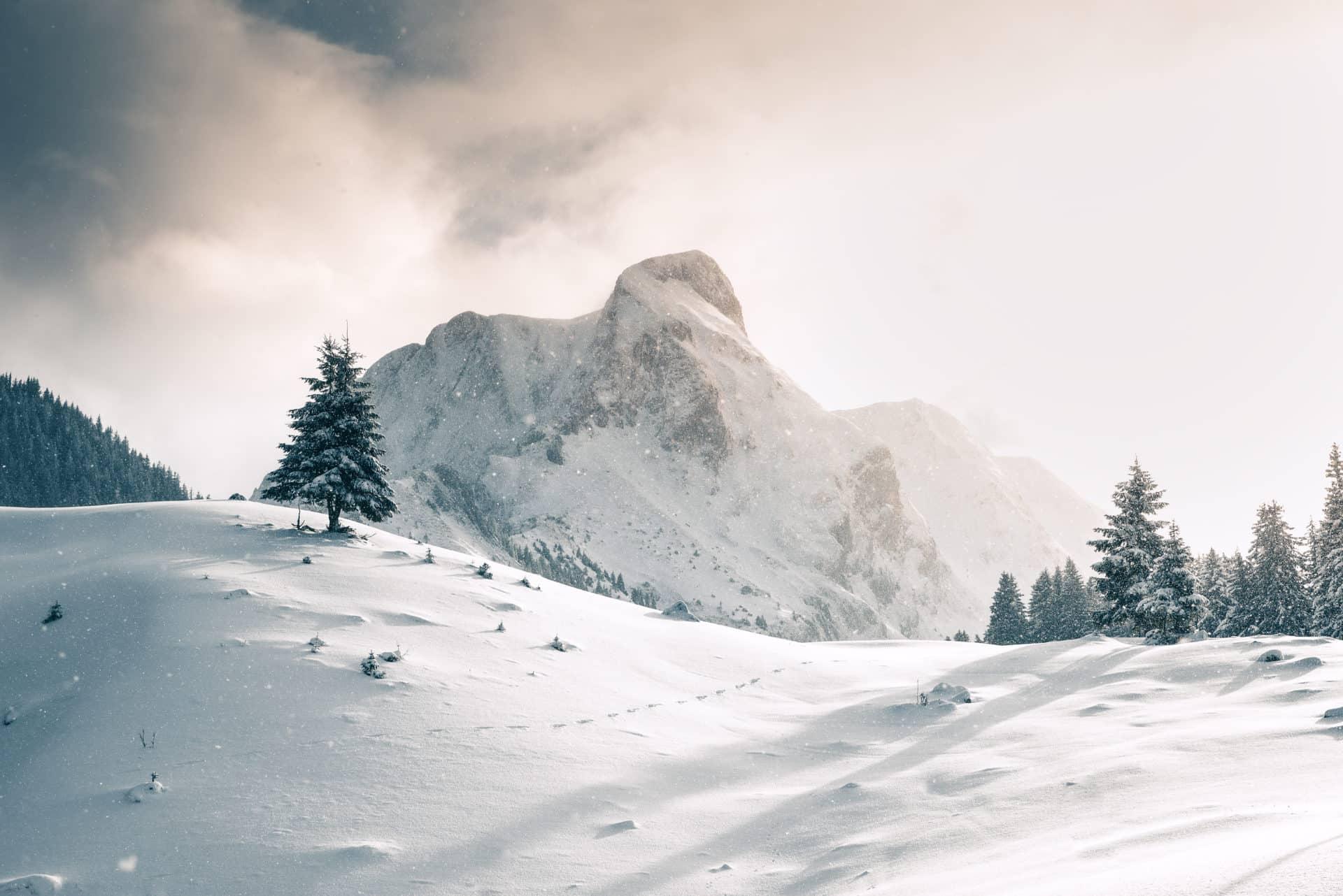 Gantrisch Winter Tanne Schnee