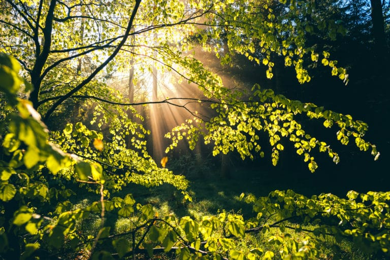 Frühling Sonnenstrahlen Wald Seeland
