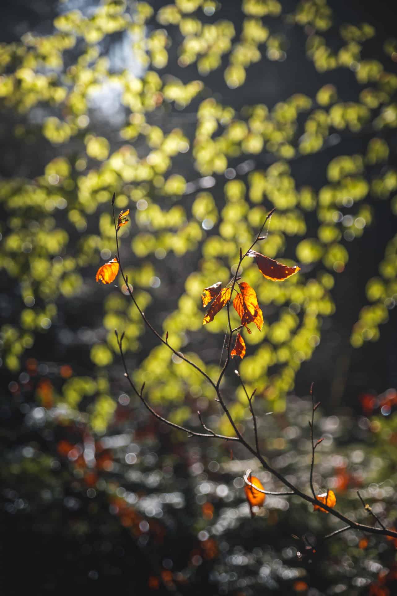 Frühling Wald Seeland